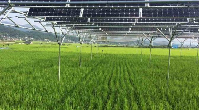 【7月14日】全国ソーラーシェアリングサミット2018inあしがら小田原大会 開催のお知らせ